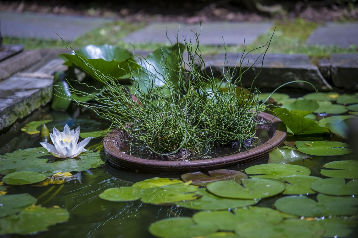 Remember to vary the types of plants in your water features.