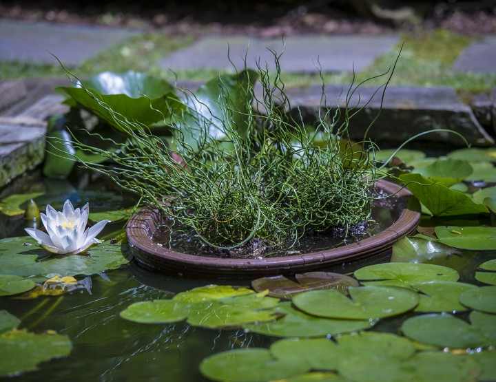 P. Allen Smith: DIY Water Garden in a Weekend