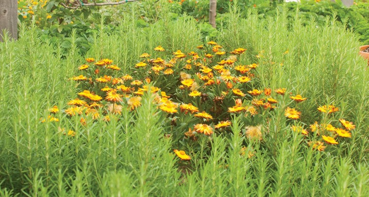 P. Allen Smith: Boon Companions - Vegetables & Flowers Grow Well Together