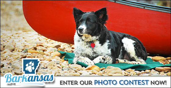 Barkansas Photo Contest Begins August 3, 2015: Enter a Shot of Your Pup in The Natural State!