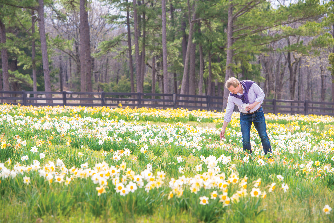 There are more than 300,000 daffodils planted at Moss Mountain Farm.