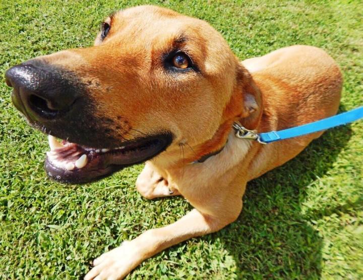 Love Dogs? The Arkansas Paws in Prison Program Will Melt Your Heart