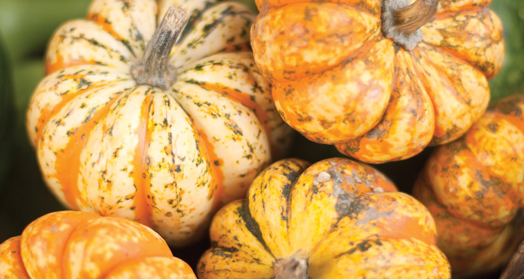 P. Allen Smith: Pile on the Gourds, Pumpkins and Winter Squash