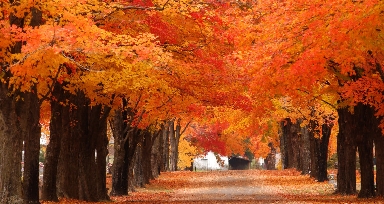 The Roads Less-Traveled: Not as Well Known Scenic Drives for Arkansas Fall Foliage Viewing