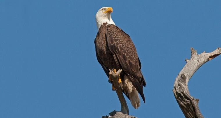 Travel Arkansas: Fly Like An Eagle