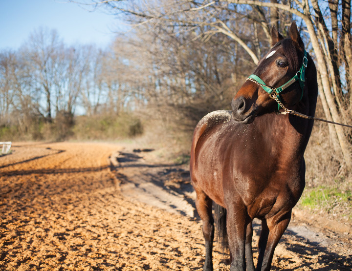 Excursion: Oaklawn - The Road to the Triple Crown Begins Here
