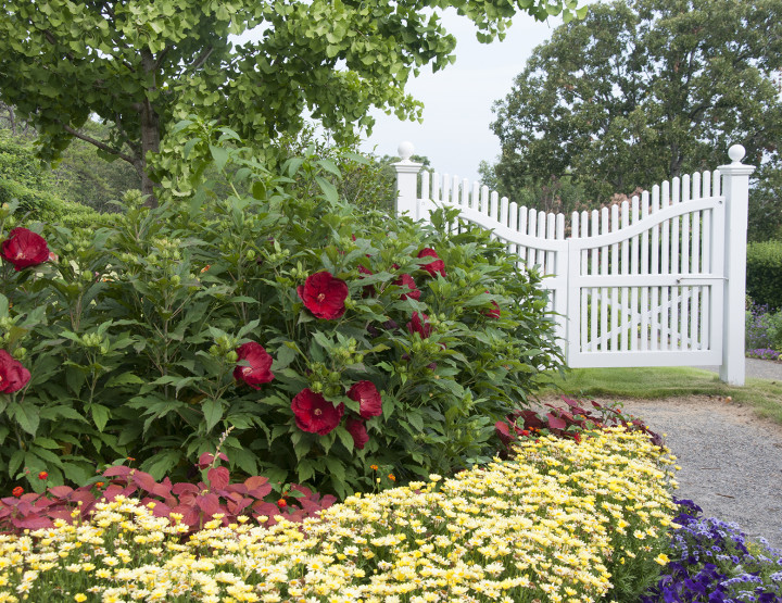 P. Allen Smith: Perennials & Pests