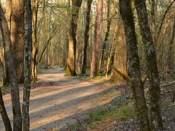 Hiking trails in Hot Springs Village