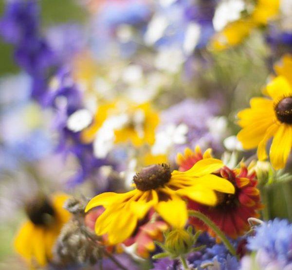 Go Wild with Native Plants