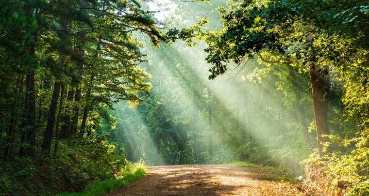 Forest bathing is the next big thing, and Arkansas is the perfect place to do it