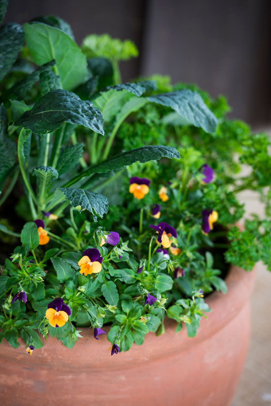 A potted mix of kale, parsley and violas can make a great addition to an edible garden.