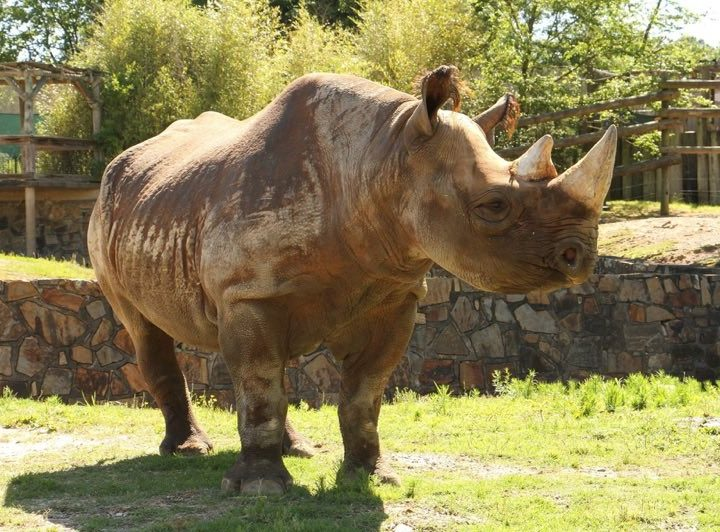 Little Rock Zoo Welcomes Second Rhino