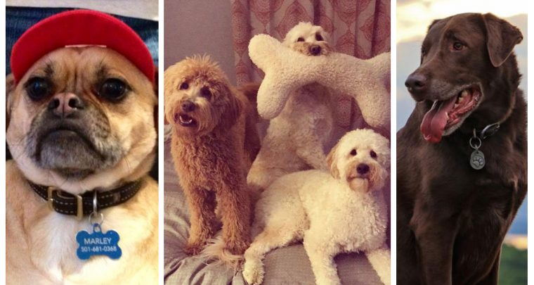 Meet the Winners of AY's Cute Pet Contest