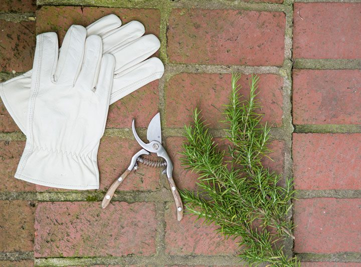 The Right Tools for Successful Gardening