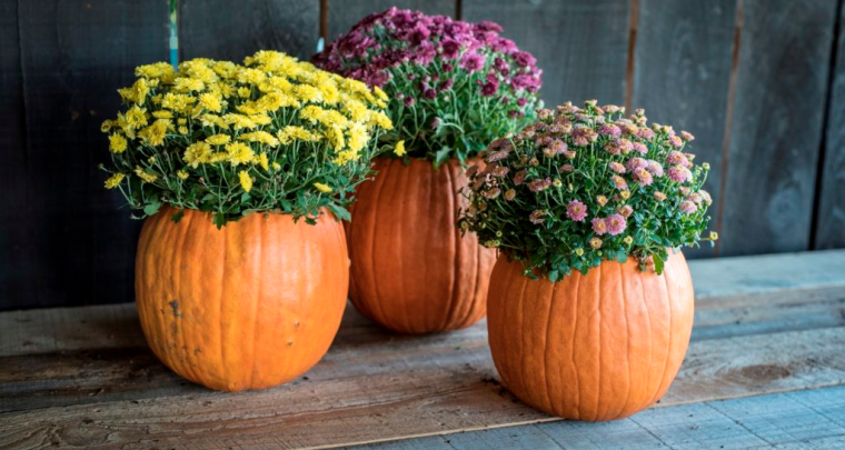 Make a Pumpkin Planter with P. Allen Smith