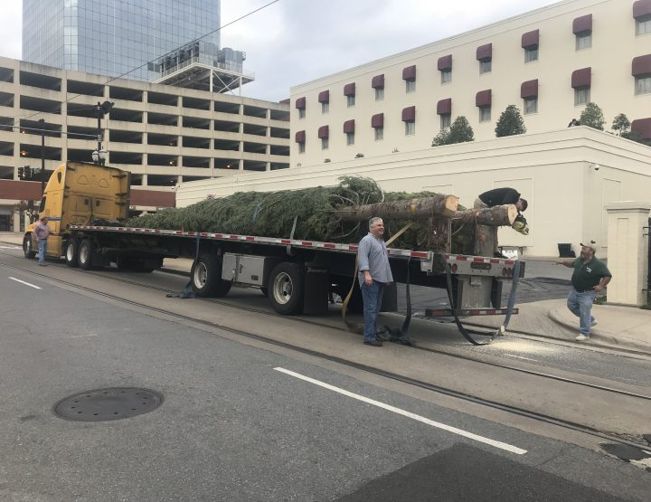 The Main Street Christmas Tree Has Arrived