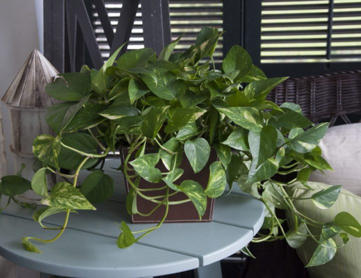 7 Plants for Your Low-Light Office