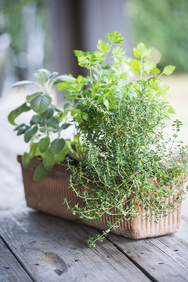 Thyme and rosemary can be planted together because they have very similar needs.