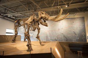 Dinosaur bones on a stand