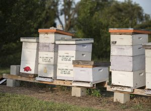boxes used to house bees