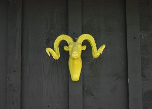 yellow goat hanging on a dark wooden wall