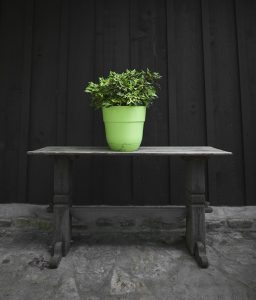 green potted plant on table in front of dark wooden background