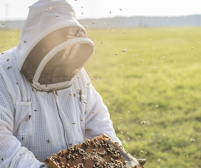 All the Buzz: Arkansas Beekeepers Keep Hope Alive