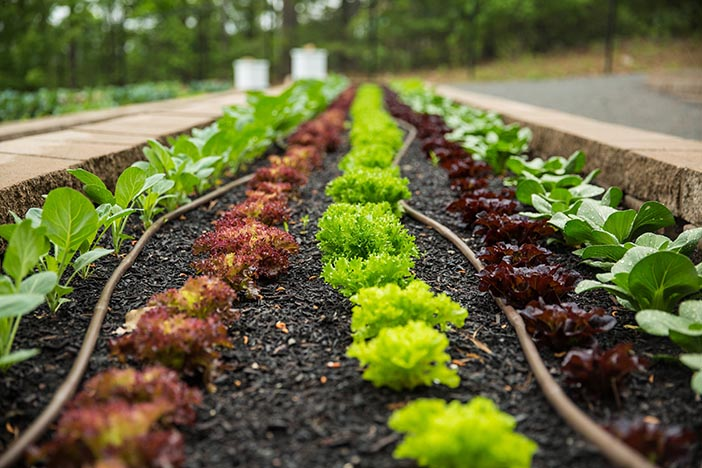 Eating Right: The Arkansas Heart Hospital Garden