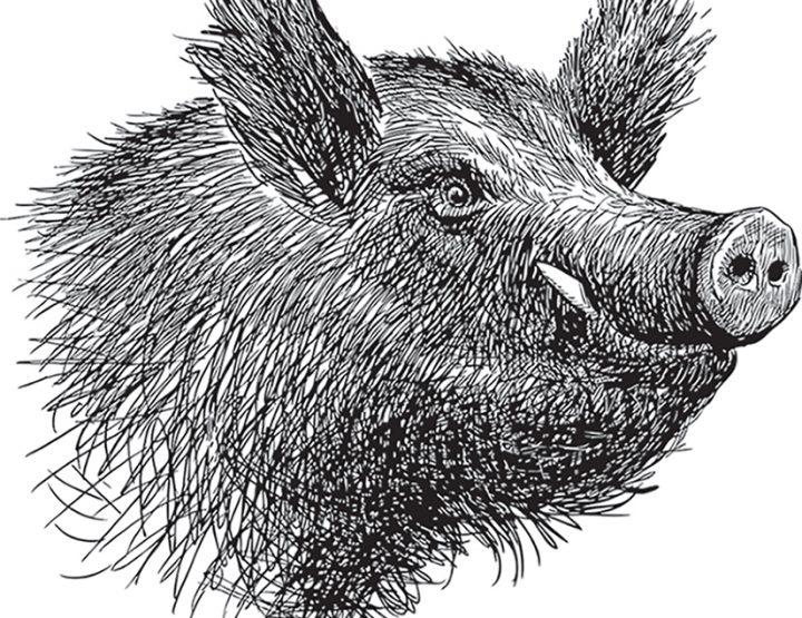 Arkansas Backstories: Razorbacks