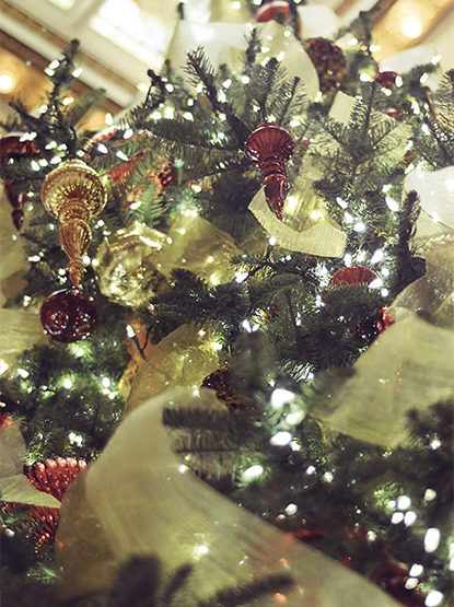 Get in the Holiday Spirit with the Capital Hotel's Tree Lighting