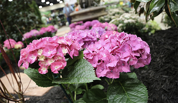 Mark Your Calendar for the Arkansas Flower and Garden Show!