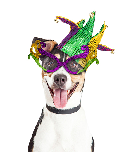 Mardi Gras is Coming to Little Rock Again with Barkus on Main